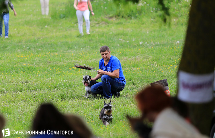 http://www.esoligorsk.by/images/news/soligorsk/2014/may/sobaki17.jpg